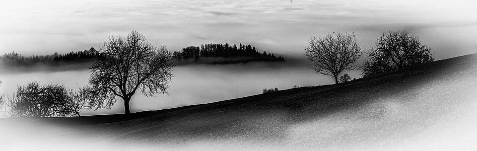 greyscale photo of trees and fogs