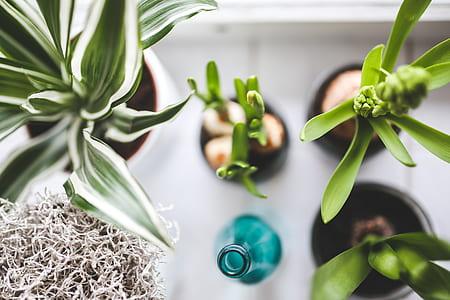 high angle photography of plants