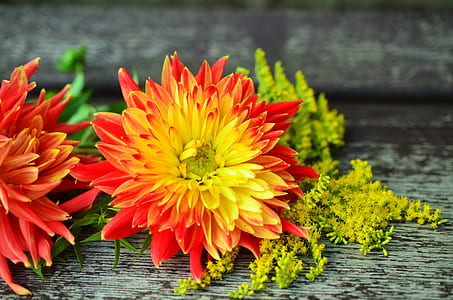 yellow and red flower on gray surface