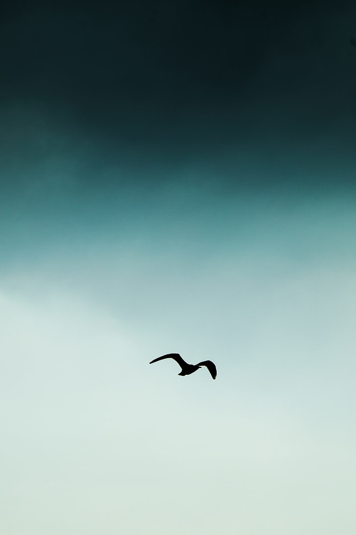 silhouette bird flying at the sky