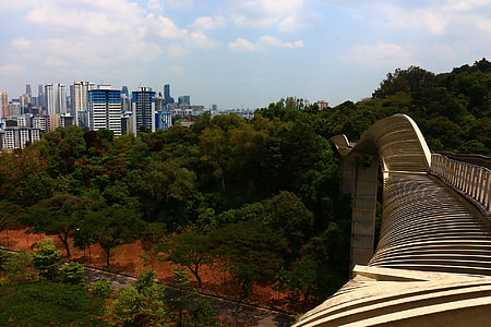 green trees and high rise buildings during daytime