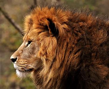 brown lion standing near brown tree