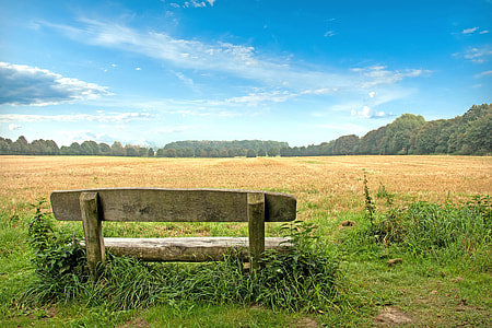 brown bench in front of brown field under blue calm sky
