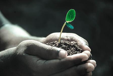 person planting tree