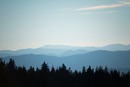selective focus photography of trees and mountains