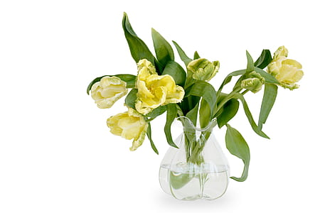 yellow tulips in clear glass vase centerpiece