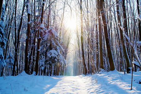 photo of tall trees covered white snows
