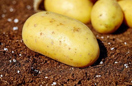 closeup photo of potato