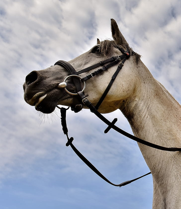 beige horse low angle photography