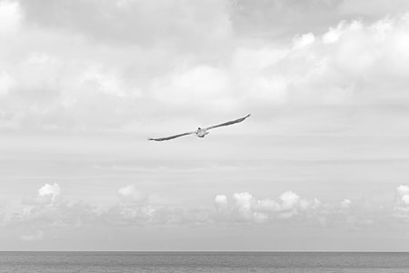 bird flying across sea at daytime