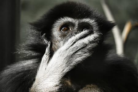 close view of primate