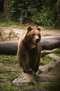 selective focus photo of brown bear on stone