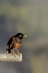 Black and Brown Bird
