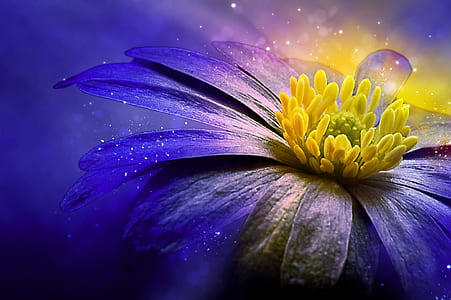 yellow and purple daisy flower wallpaper