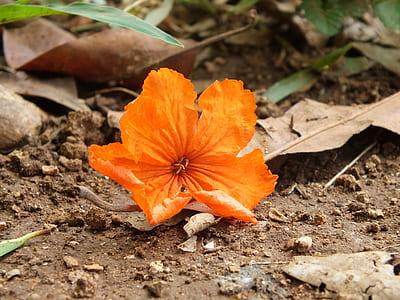 orange 5-petaled flower on ground