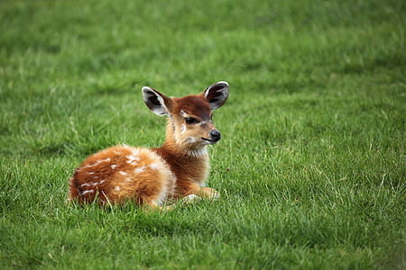 reindeer in green grass
