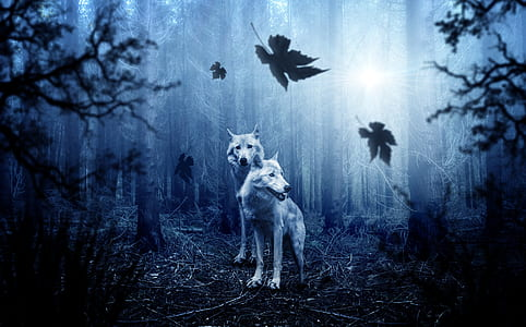 two wolves in forest photo