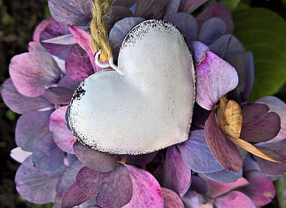 hydrangeas, heart, autumn, hydrangea flowers, turning to fall colors, metal heart