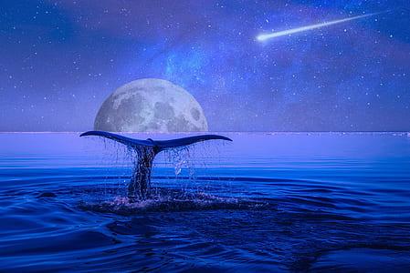 whale tale in sea wallpaper