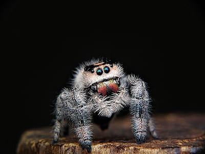 closeup photo of gray spider
