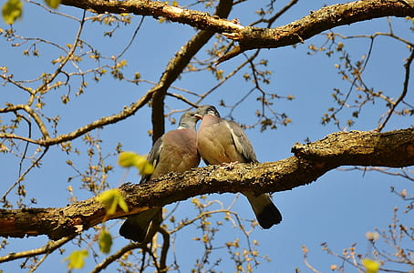 two bird kissing each other on branch of a tree photo