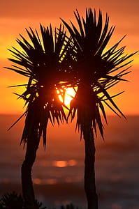 silhouette of two plants behind sunset