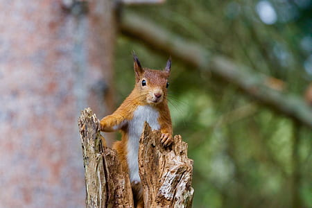 shallow focus photography of brown squirrel on top of log