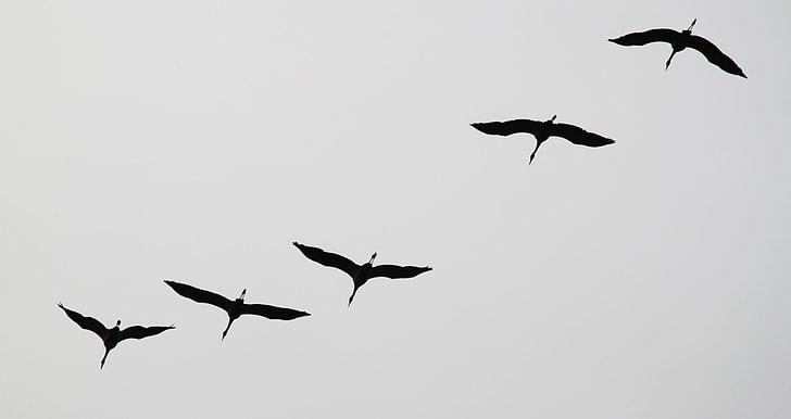 five white birds flying