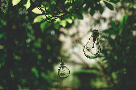 close-up photography of LED bulb hanging on green leaf tree