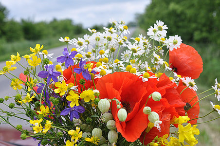 red poppies, purple irises, and white chamomiles bouquet