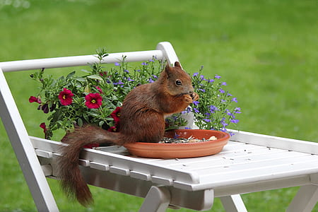 brown squirrel eating on round brown clay plate