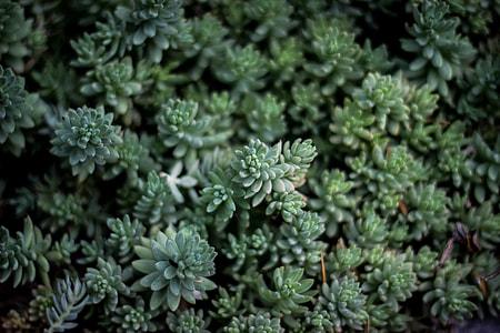 closeup photo of green leaf plant