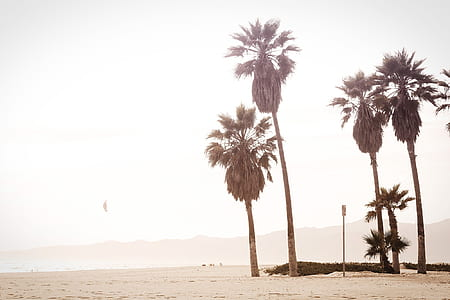 photo of coconut trees in seashore