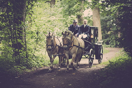 Two Man On A Carriage With Horse
