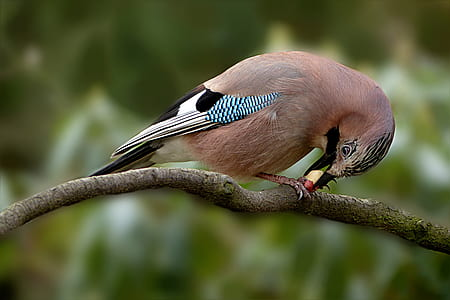 closeup photo of brown and gray bird