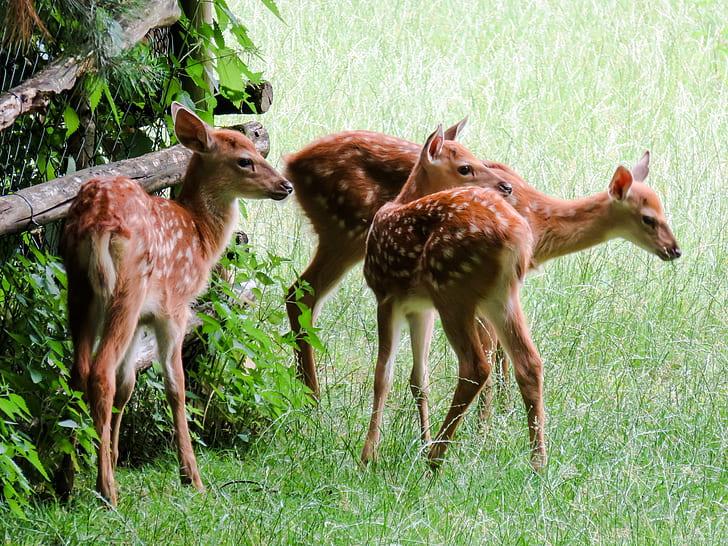 three brown deers photography