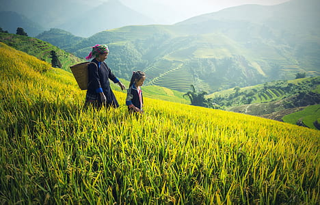 woman and girl walking on rice field