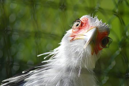 selective focus photography of secretary bird