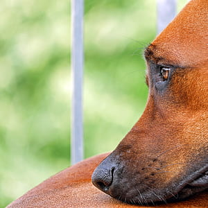 selective focus photography of tan dog