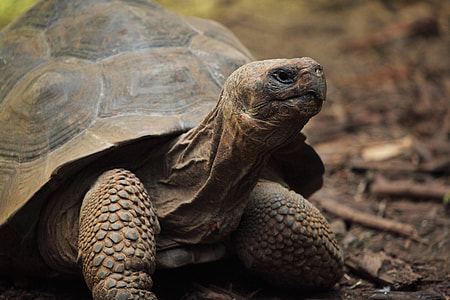 brown and black tortoise
