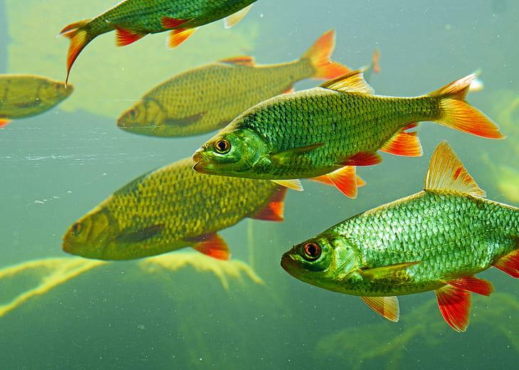 school of green fish