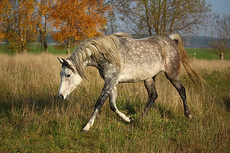 brown and white horse walking on grass field during daytime