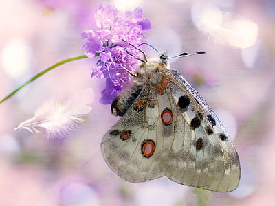 white, black, and red spotted butterfly perched on purple petaled flower closeup photography