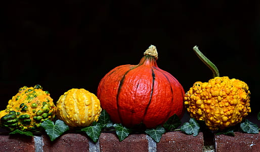 four assorted color and type of rare squashes
