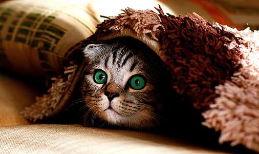 gray cat under mat