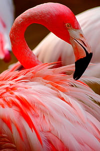 red and white flamingo