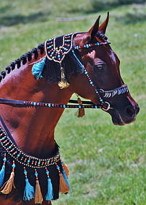 brown horse with multicolored horse straps taken during daytime