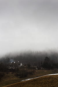 house near forest covered with fogs