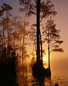 silhouette of trees on body of water