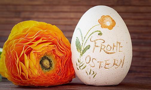 orange flower near white egg